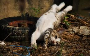 Picture pose, kitty, grey, wall, wheel, yard, lies, kitty, striped, stretching, bus, acrobatics, white, village cat