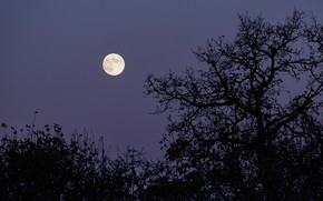Picture the sky, trees, night, nature, the moon, Oregon, USA, the full moon