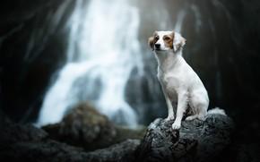 Picture stone, waterfall, dog, bokeh