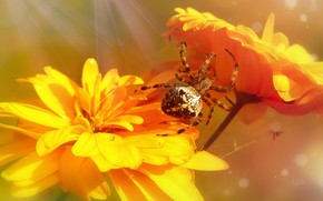 Picture summer, macro, flowers, orange, background, web, spider, yellow, petals, bokeh, spider