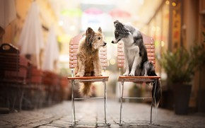 Picture dogs, chairs, friends