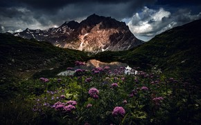 Picture flowers, mountains, night