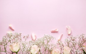 Picture flowers, roses, petals, pink, pink background, pink, flowers, beautiful, romantic, petals, roses
