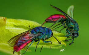 Picture macro, insects, green, background, two, leaf, OSA, spider, shiny, wasps, girlfriend, spider, bestanca, blatancy