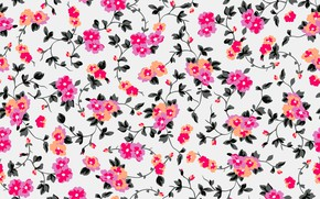 Picture background, figure, colorful, ornament, pink, flowers, floral, background, pattern, floral