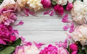Picture flowers, pink, wood, pink, flowers, peonies, peonies