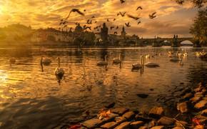 Picture autumn, landscape, sunset, birds, bridge, the city, river, building, the evening, Prague, Czech Republic, swans