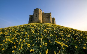 Picture England, Narcissus, Ruined, Daffodil Castle