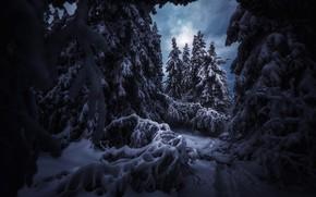 Picture winter, snow, trees, landscape, nature, trails, ate