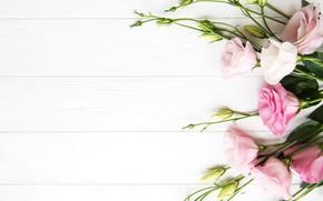 Picture white, background, bouquet, eustoma, Olena Rudo