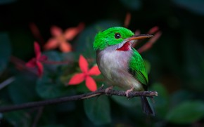 Picture leaves, flowers, green, the dark background, branch, bird, Kingfisher