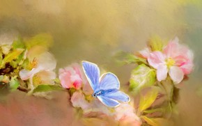 Picture macro, flowers, butterfly, branch, flowering