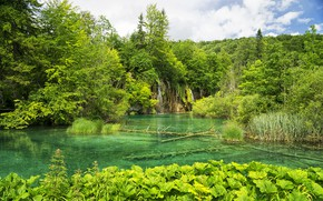 Picture forest, nature, lake, Park, Croatia