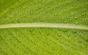 Picture wet, drops, macro, sheet
