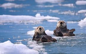 Picture sea, ice, Alaska, USA, Kalan