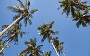 Picture beach, summer, the sky, the sun, palm trees, summer, beach, beautiful, paradise, palms, tropical