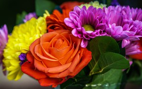 Picture flowers, bright, bright, rose, orange, bouquet, yellow, petals, different, lilac, dahlias, trophy plan