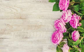 Picture flowers, roses, petals, pink, wood, pink, flowers, petals, roses