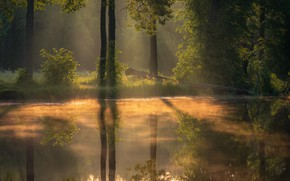 Picture forest, trees, landscape, nature, fog, pond, morning, Andrei