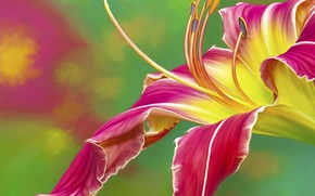 Picture background, treatment, petals, daylilies