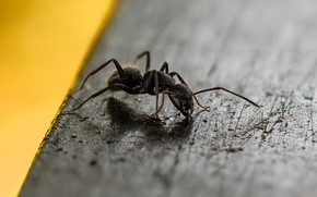 Picture macro, background, ant