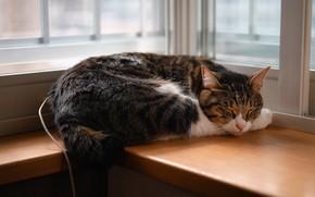 Picture cat, cat, grey, window, sleeping, lies, sill, striped