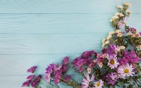 Picture flowers, chrysanthemum, wood, flowers, beautiful, spring, purple, multicolored