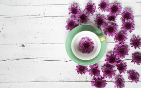 Picture flowers, Cup, chrysanthemum, wood, flowers, cup, purple