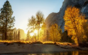 Picture trees, mountains, morning