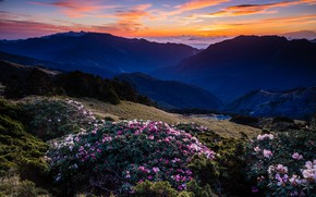 Picture forest, the sky, clouds, landscape, sunset, flowers, mountains, nature, fog, blue, hills, tops, view, height, …