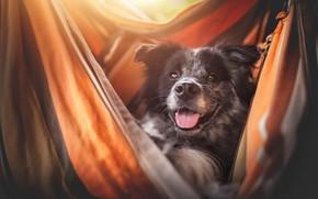 Picture language, look, face, light, smile, comfort, stay, portrait, dog, hammock, fabric, happy