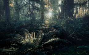 Picture forest, the sun, rays, light, trees, branches, thickets, trunks, vegetation, jungle, twilight, fern