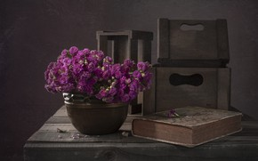 Picture flowers, the dark background, Board, bouquet, pot, book, boxes, pink, still life, items, composition, begonia, …