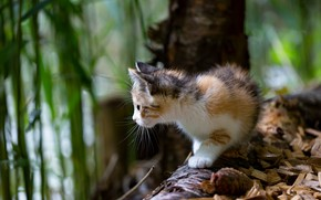 Picture cat, look, face, nature, pose, kitty, tree, blur, baby, profile, bump, bokeh, spotted, motley