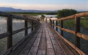 Picture summer, bridge, river