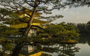 Picture trees, lake, Park, Japan, island, Kyoto