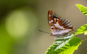 Picture leaves, macro, background, pattern, butterfly, plant, profile, insect, wings, brown
