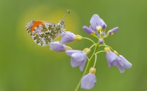 Picture flower, butterfly, dawn