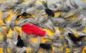 Picture pen, feathers, yellow background, widescreen, background, фон background, the Wallpapers, full screen, HD wallpapers, decoration, …
