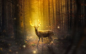 Picture forest, trees, night, fire, deer, lights, fantasy, horns