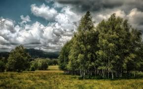 Picture field, summer, birch