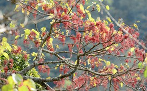 Picture nature, berries, tree