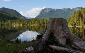 Picture mountains, lake, stump