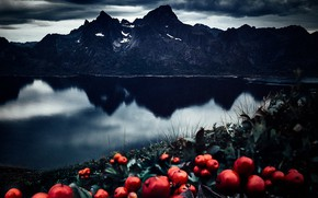 Picture sea, landscape, mountains, clouds, nature, berries, rocks, vegetation, Norway, Lofoten