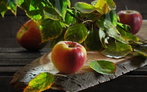 Picture leaves, apples, Board, branch, fruit, Sergey Pounder