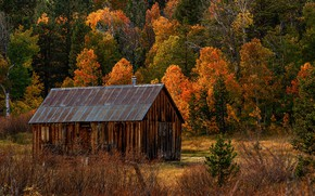 Picture autumn, forest, trees, the barn, CA, USA, Hope Valley