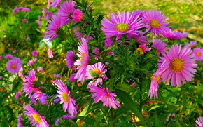 Picture flowers, beauty, Autumn bouquet