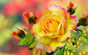 Picture berries, Rose, yellow, gold