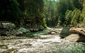 Picture forest, water, trees, nature, river, stones, Canada