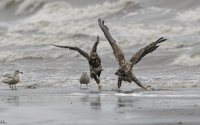 Picture beach, birds, nature, shore, DUELL ©